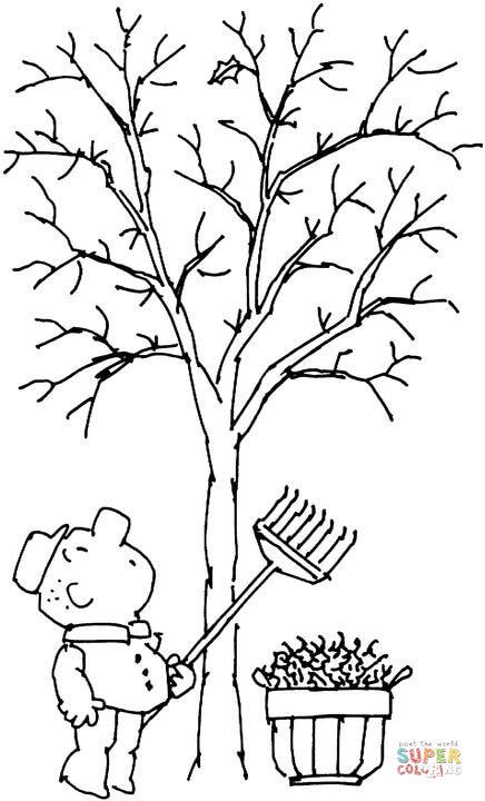 Vogel Baum Natur Kirschbaum Sommer Herbst