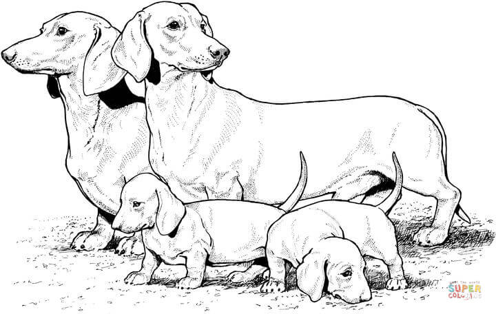 dachshund  puppies coloring page  free printable