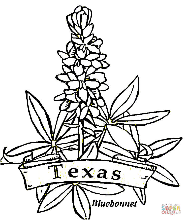 texas flowers coloring page  free printable coloring pages