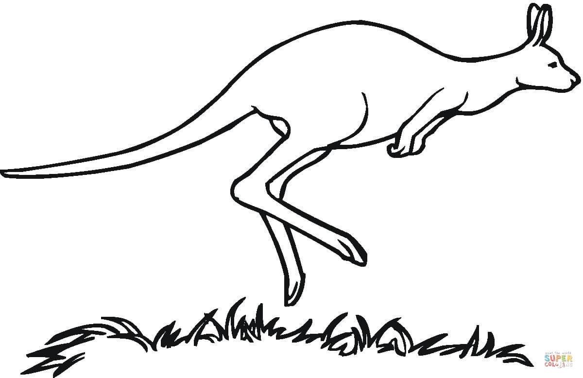 Australian Kangaroo Coloring Page Free Printable Coloring Pages
