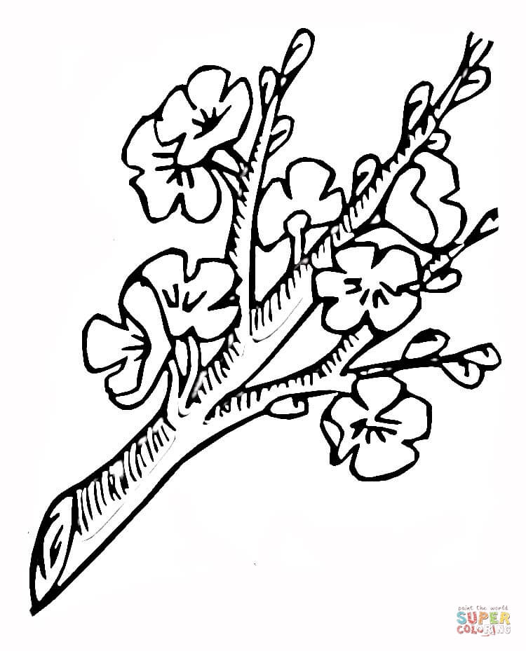 Cherry Blossom Tattoo Outline Drawing Sketch Coloring Page