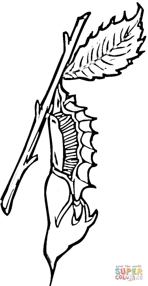 Chrysalis Coloring Page Free Printable Coloring Pages