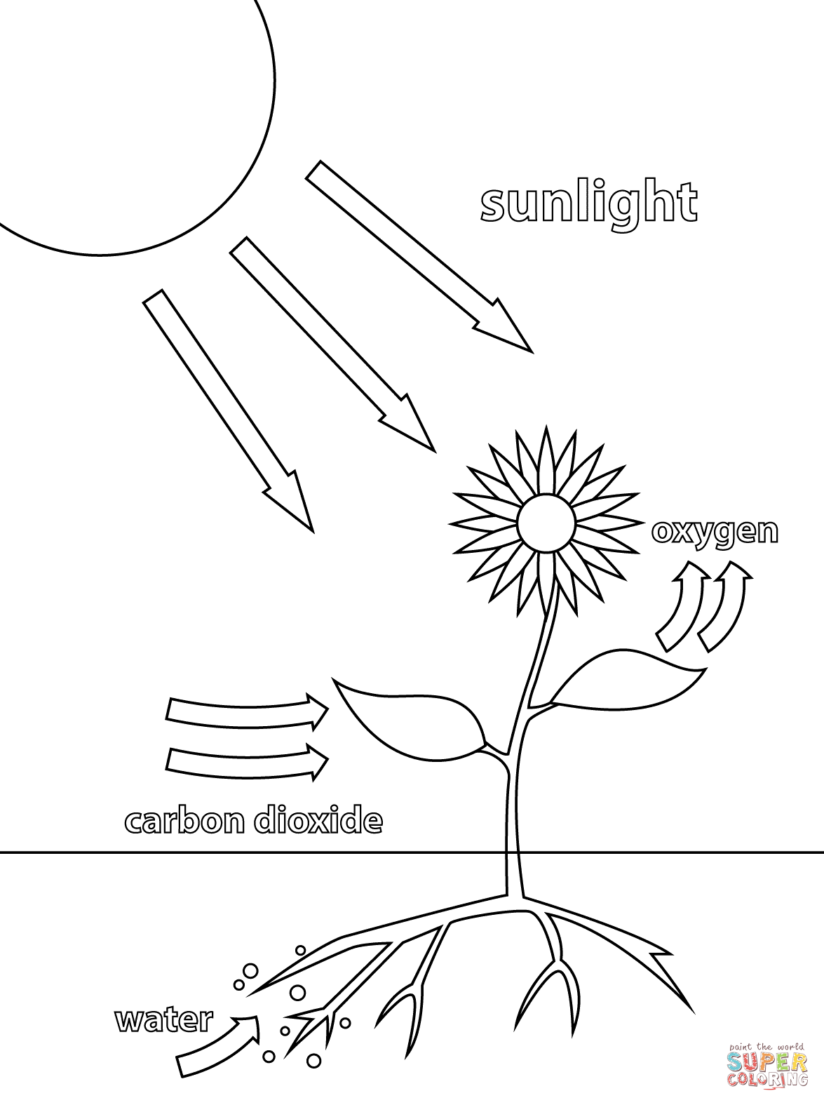 Photosynthesis Coloring Page