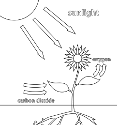 click the photosynthesis coloring pages to view printable  [ 1175 x 1575 Pixel ]