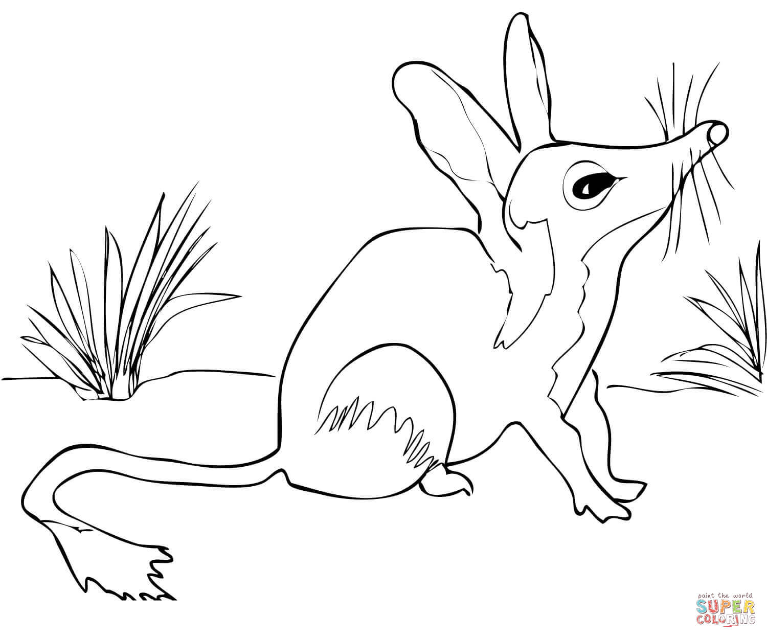 Australian Bilby Coloring Page