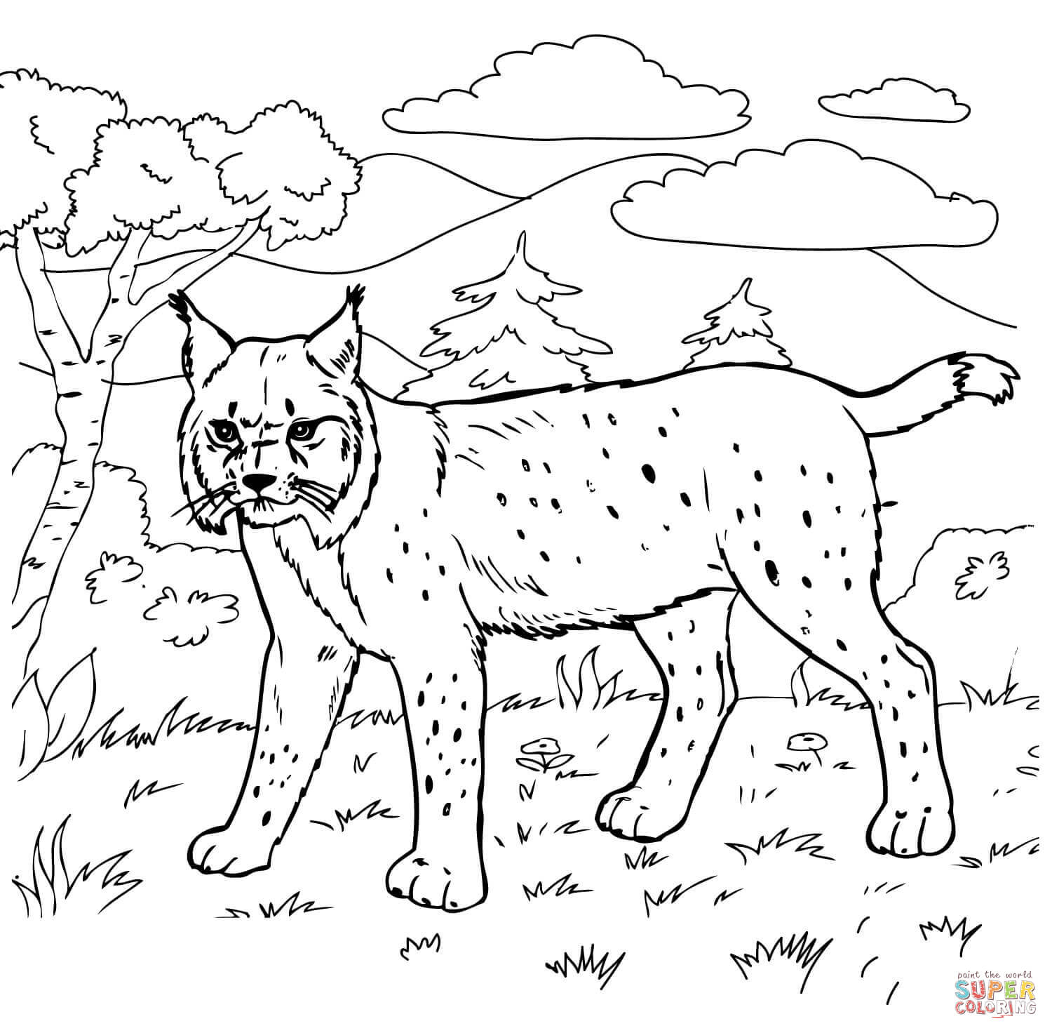 Bobcat In The Forest Coloring Page