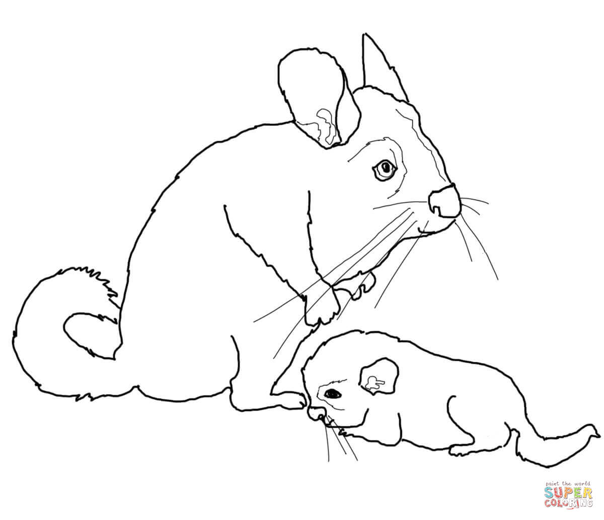 Mother And Baby Chinchilla Coloring Page