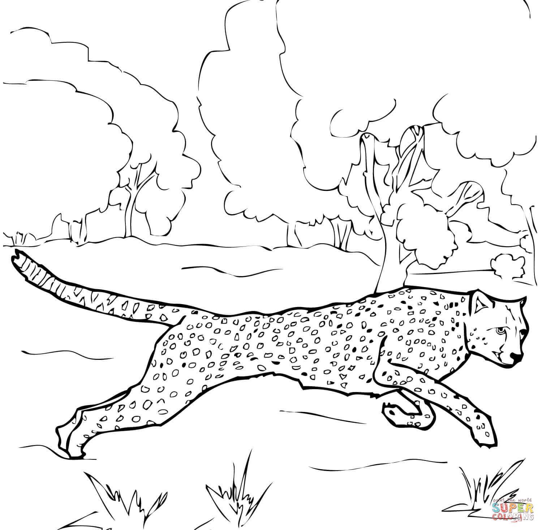 Running Cheetah Coloring Page