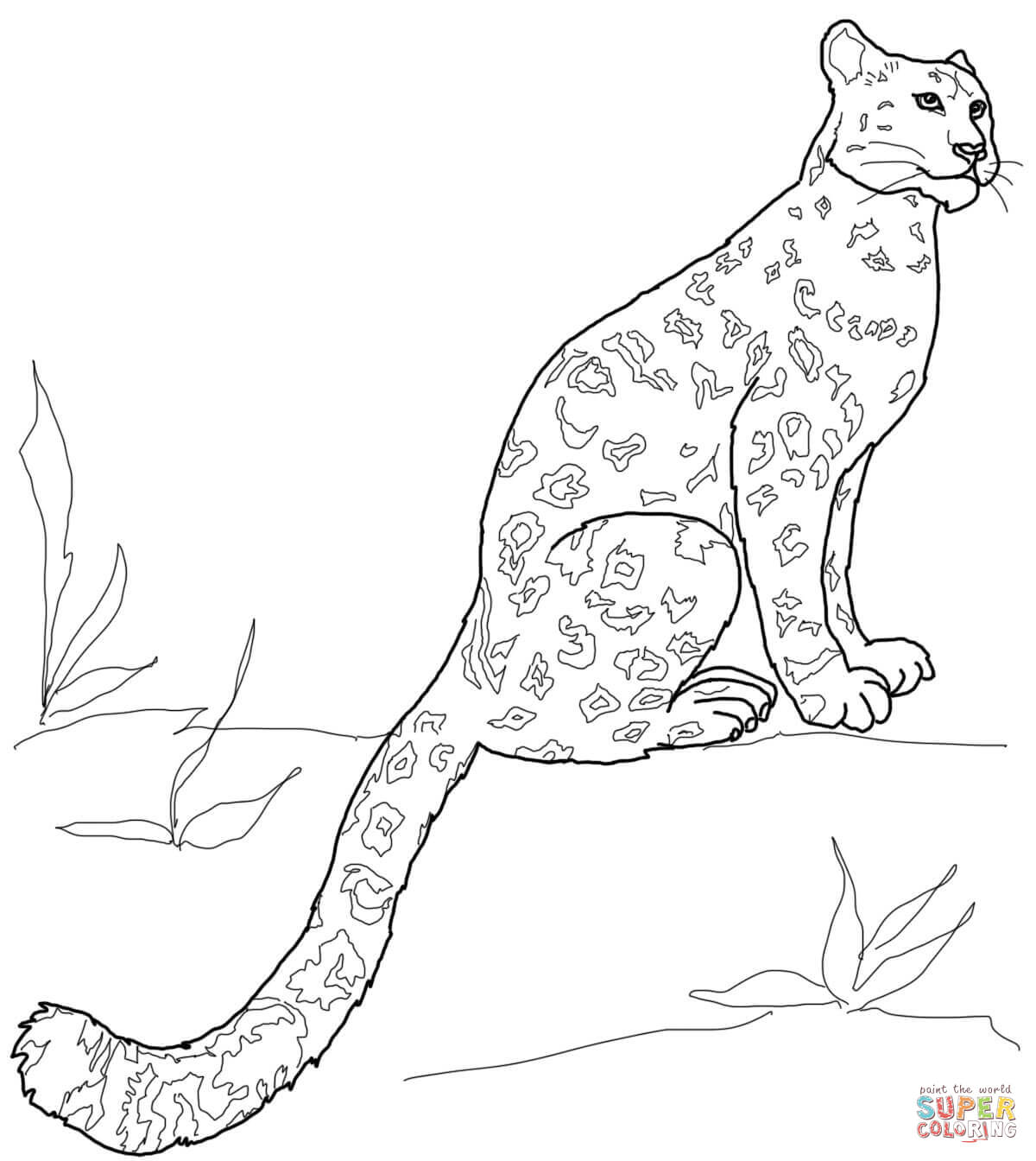 Snow Leopard Sitting Coloring Page