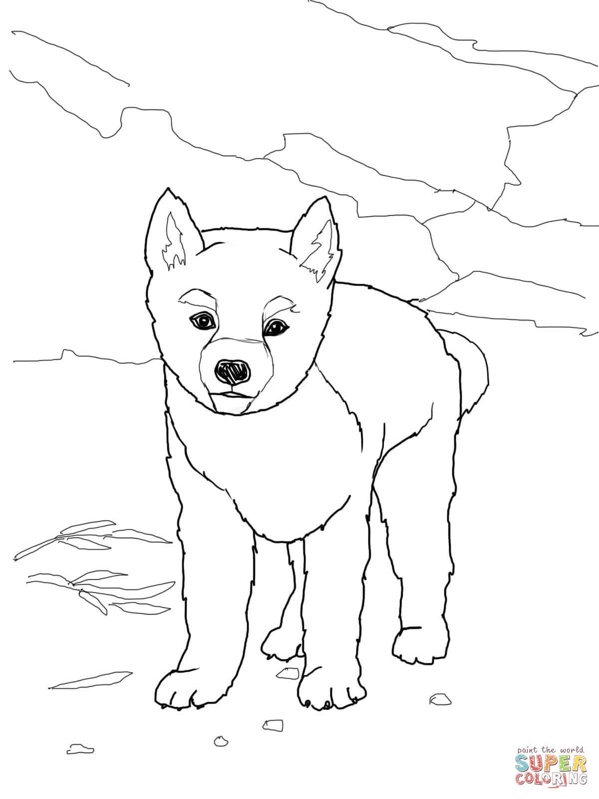 Kolorowanka Szczeniak Dingo