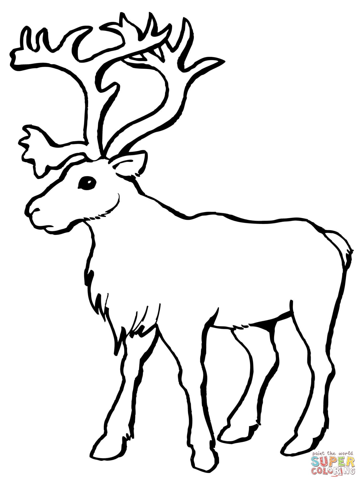 Reindeer Caribou Coloring Page