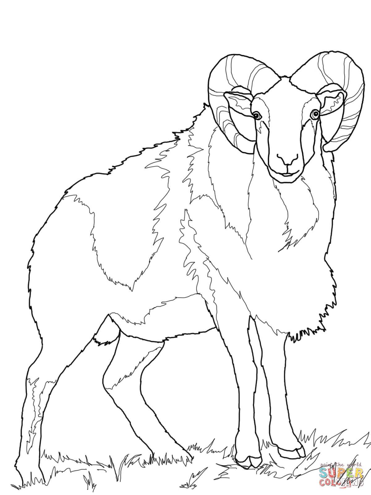 Wild Sheep Mouflon Coloring Page