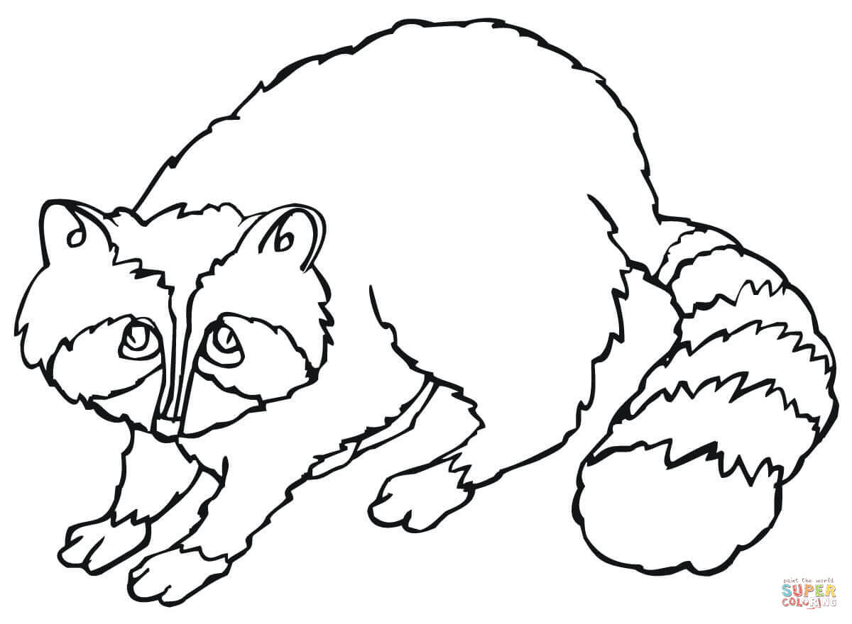 Cute Raccoon Coloring Page