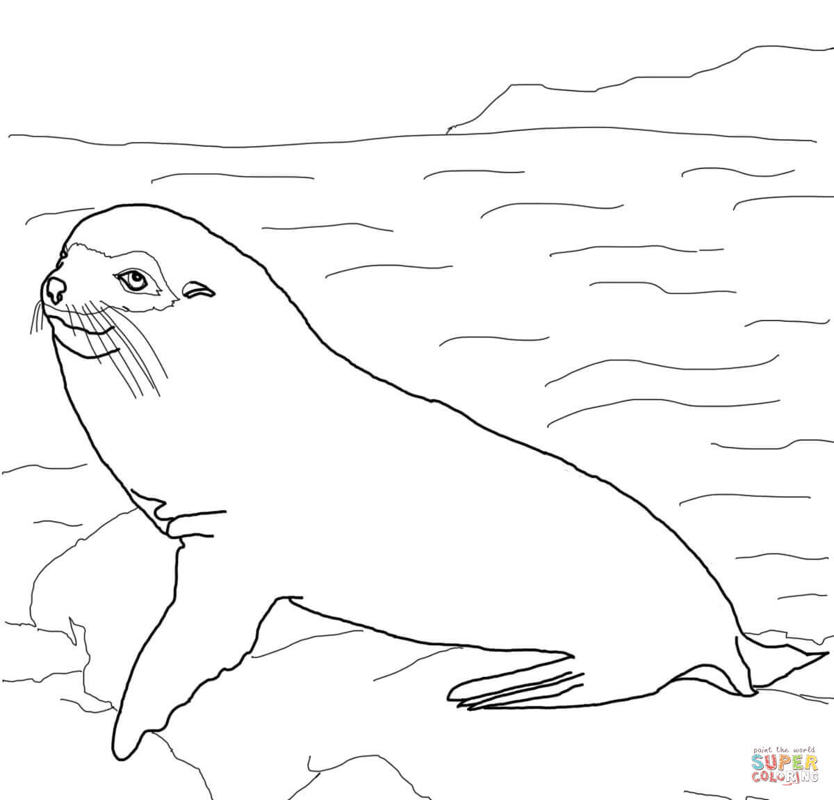 Galapagos Fur Seal Coloring Page