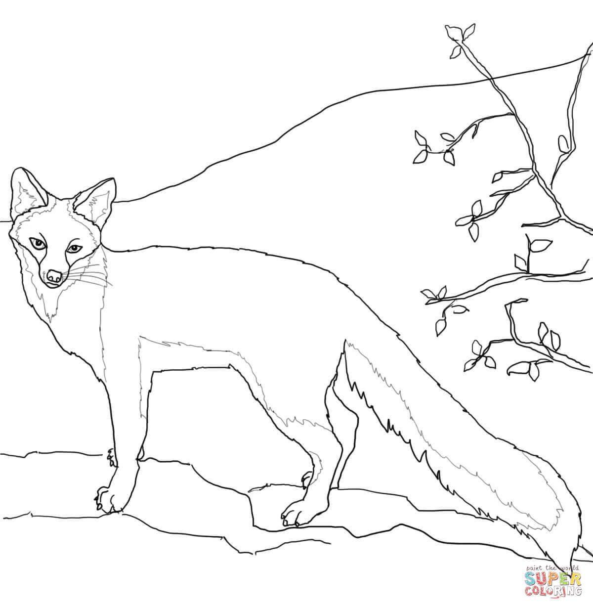 Grey Fox Coloring Pages Free Coloring Pages