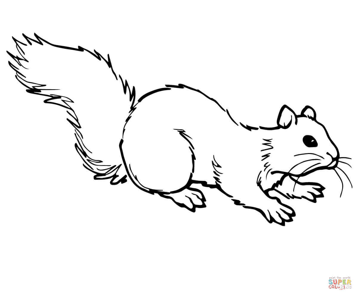 Grey Squirrel On Ground Coloring Page