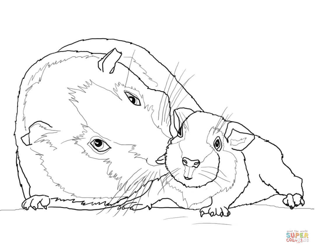 Guinea Pig Mother And Baby Coloring Page
