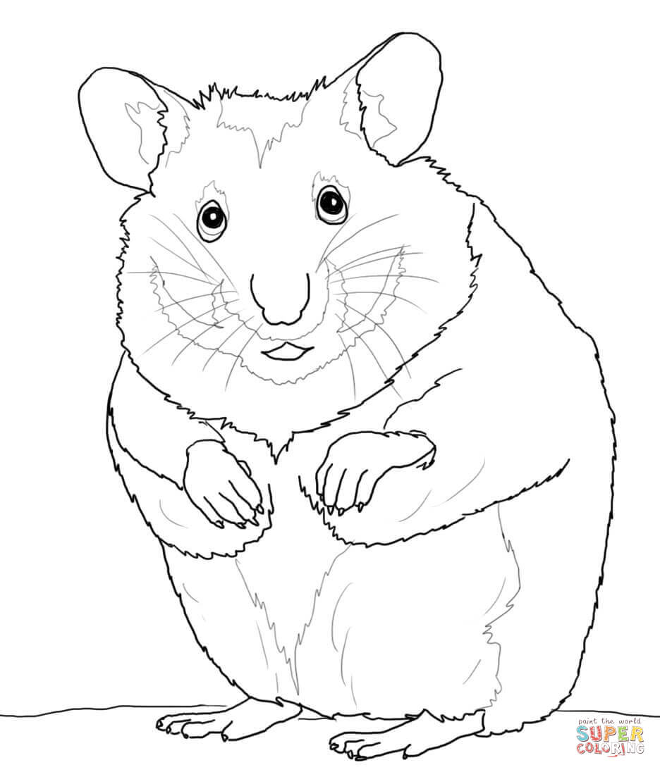 Hamsters Coloring Pages Free Coloring Pages