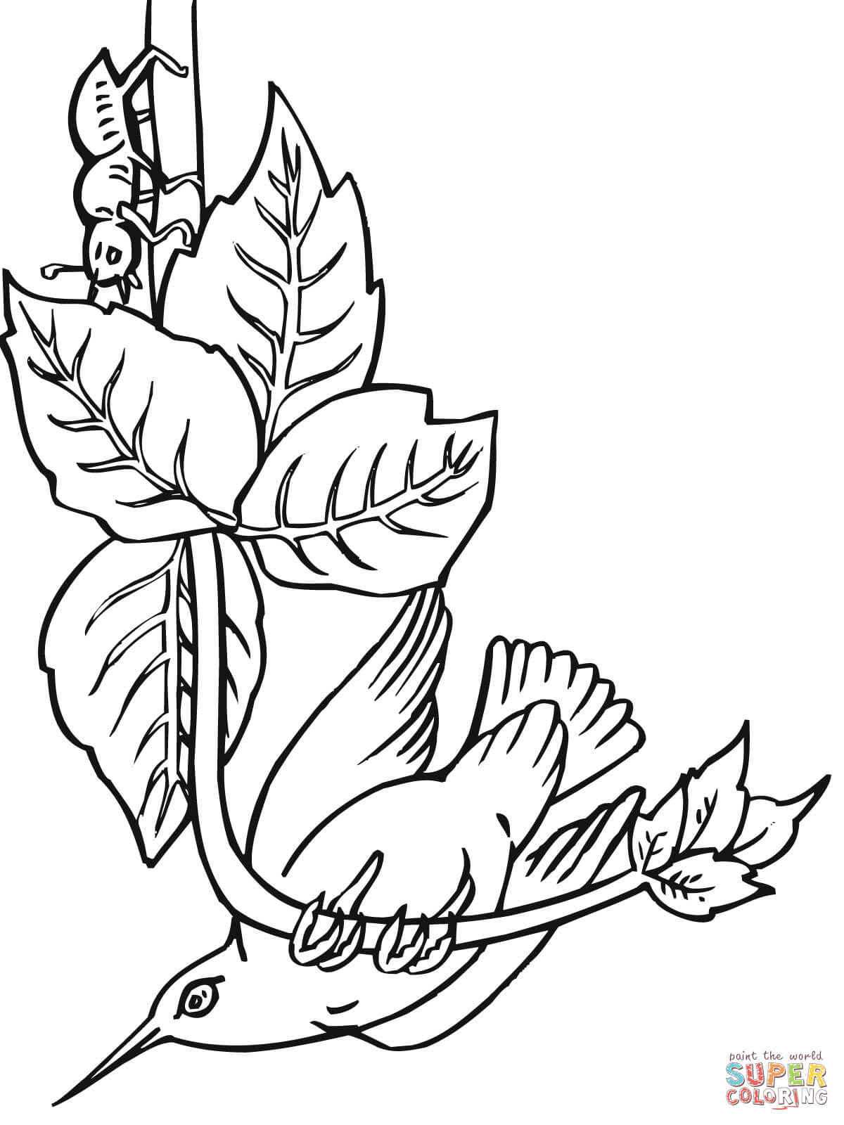 Hummingbird Perched On Branch Coloring Page