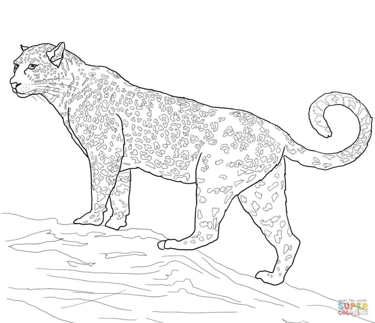 Ausmalbild Gro Katze Jaguar