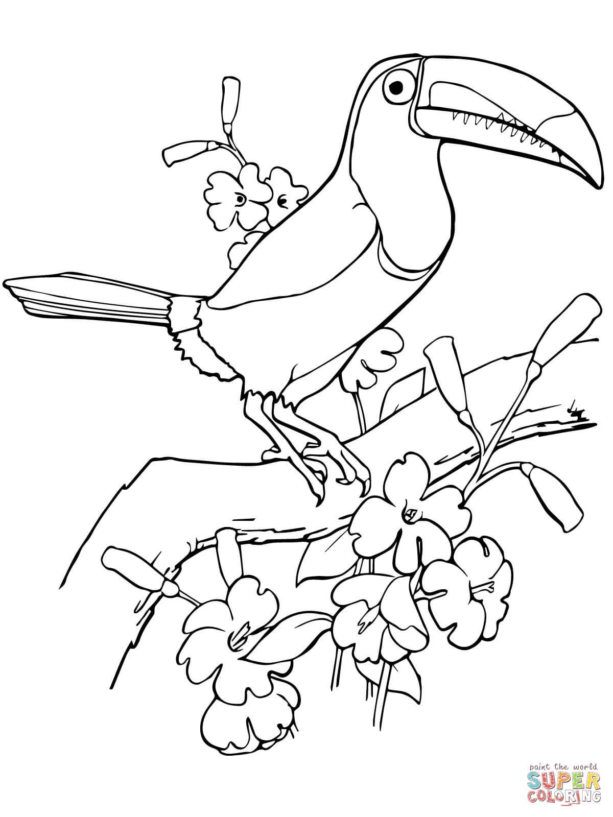 Dibujo De Tucan Pico Iris Para Colorear