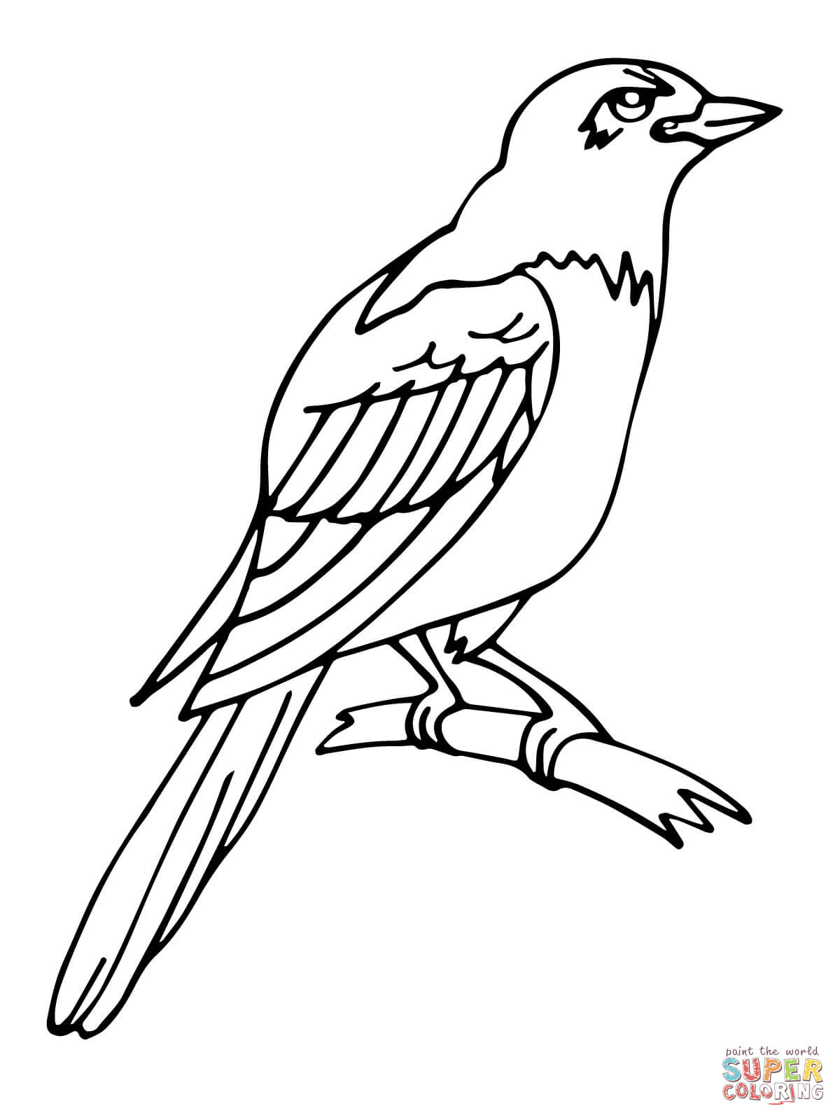 Hornbill Coloring Pages Coloring Pages