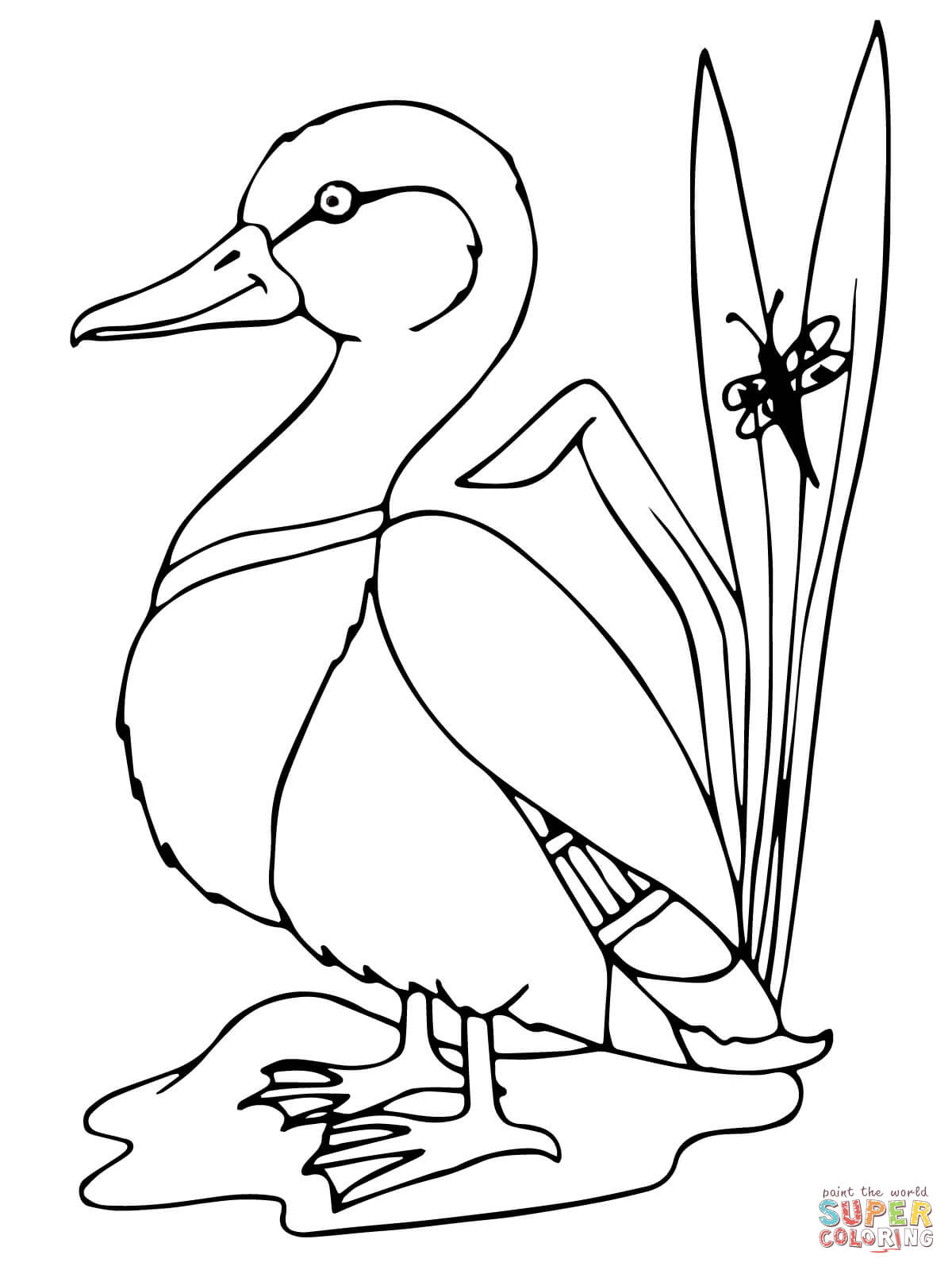Mallard Duck Coloring Pages Sketch Coloring Page