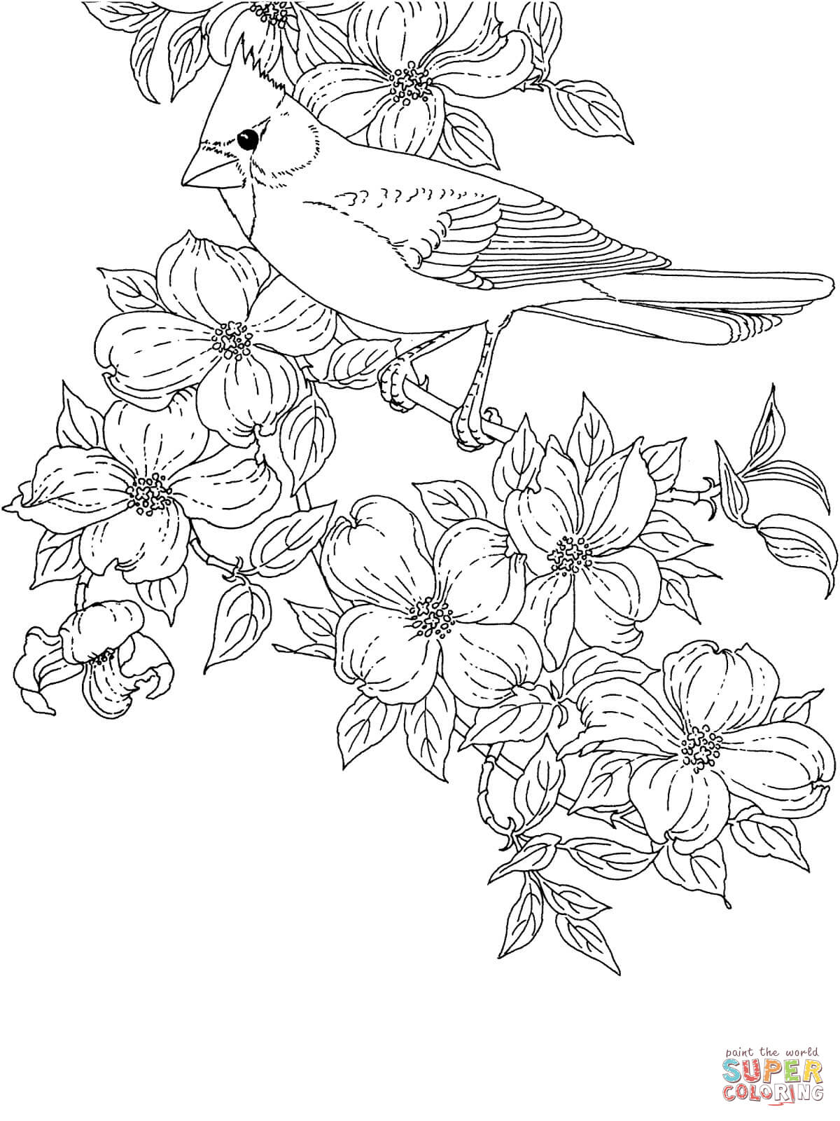 Cardinal Bird and Flowering Virginia State Flower coloring