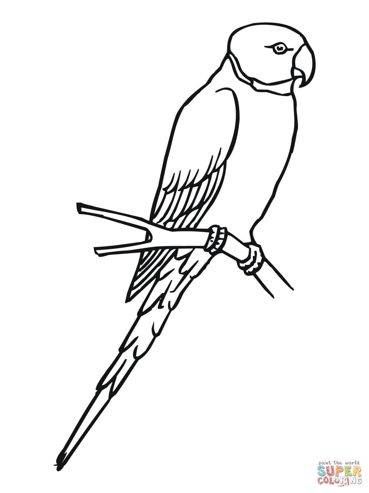 Dibujo de Un Periquito para colorear  Dibujos para