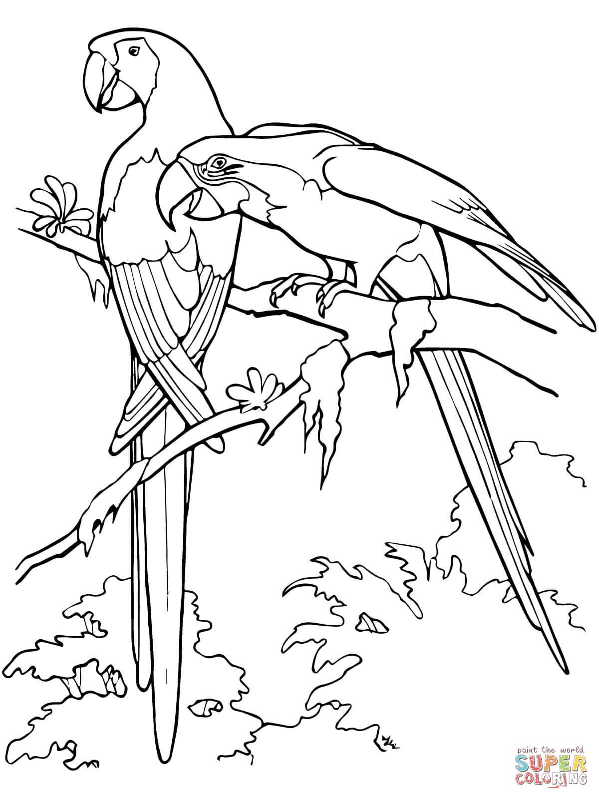 Disegno di Due eseplari di ara scarlatta da colorare
