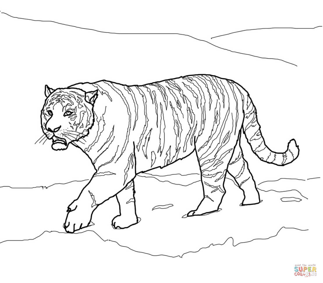 Siberian Or Amur Tiger Coloring Page