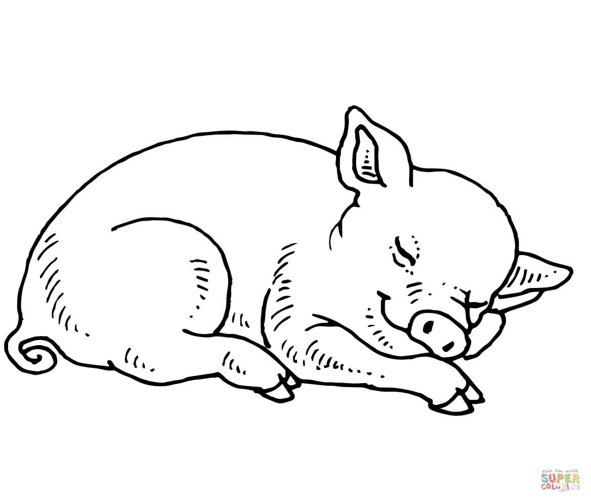 Sleeping Baby Pig Coloring Page