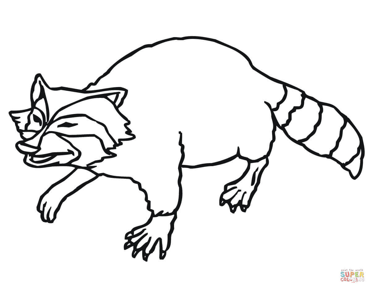 Raccoon Outline Coloring Pages