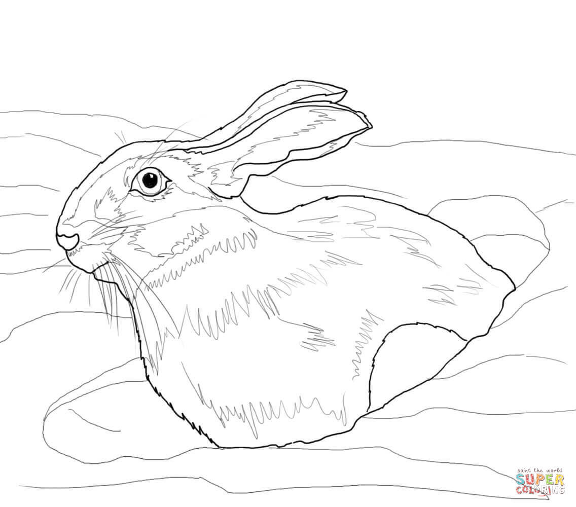 Snowshoe Hare In Snow Drift Coloring Page