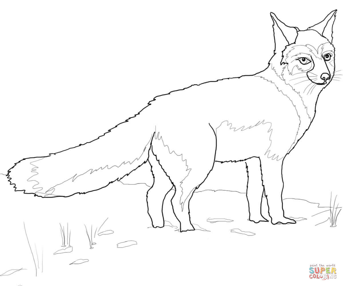Swift Fox Coloring Page