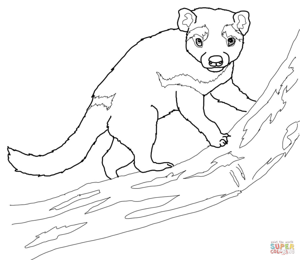 Tasmanian Devil On A Tree Coloring Page