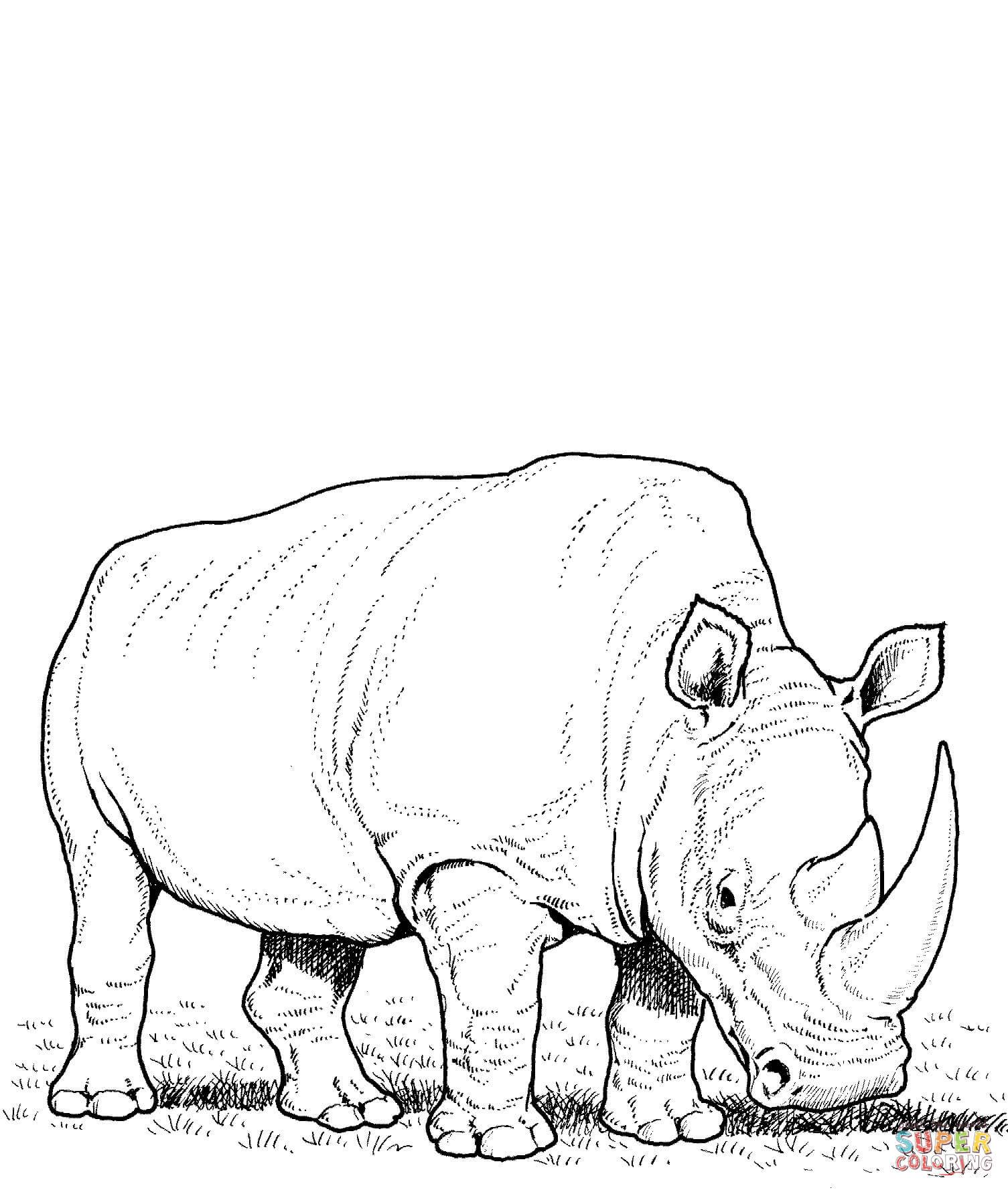 Desenho de Rincoeronte-branco comendo grama para colorir