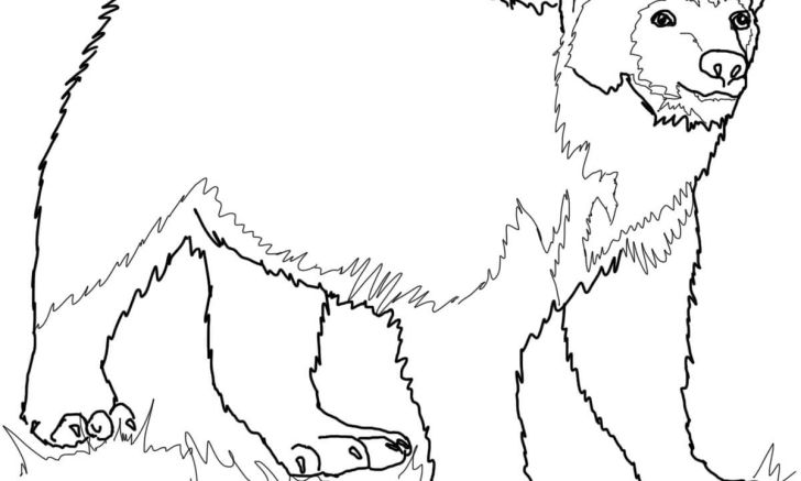 Wolverine coloring page backgrounds of smartphone hd pics animal printable