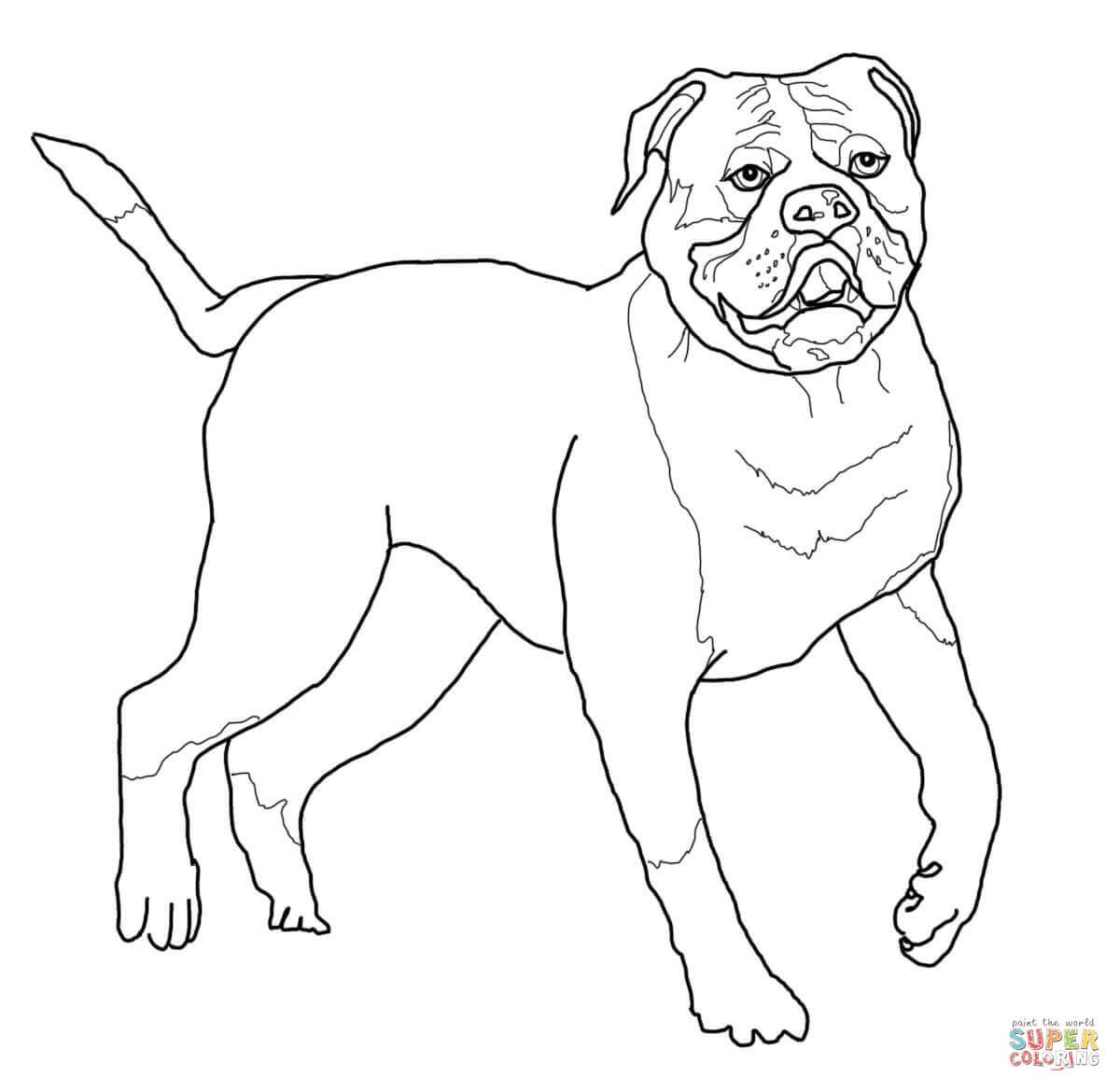 20 Besten Ideen Bulldog Ausmalbilder - Beste Wohnkultur