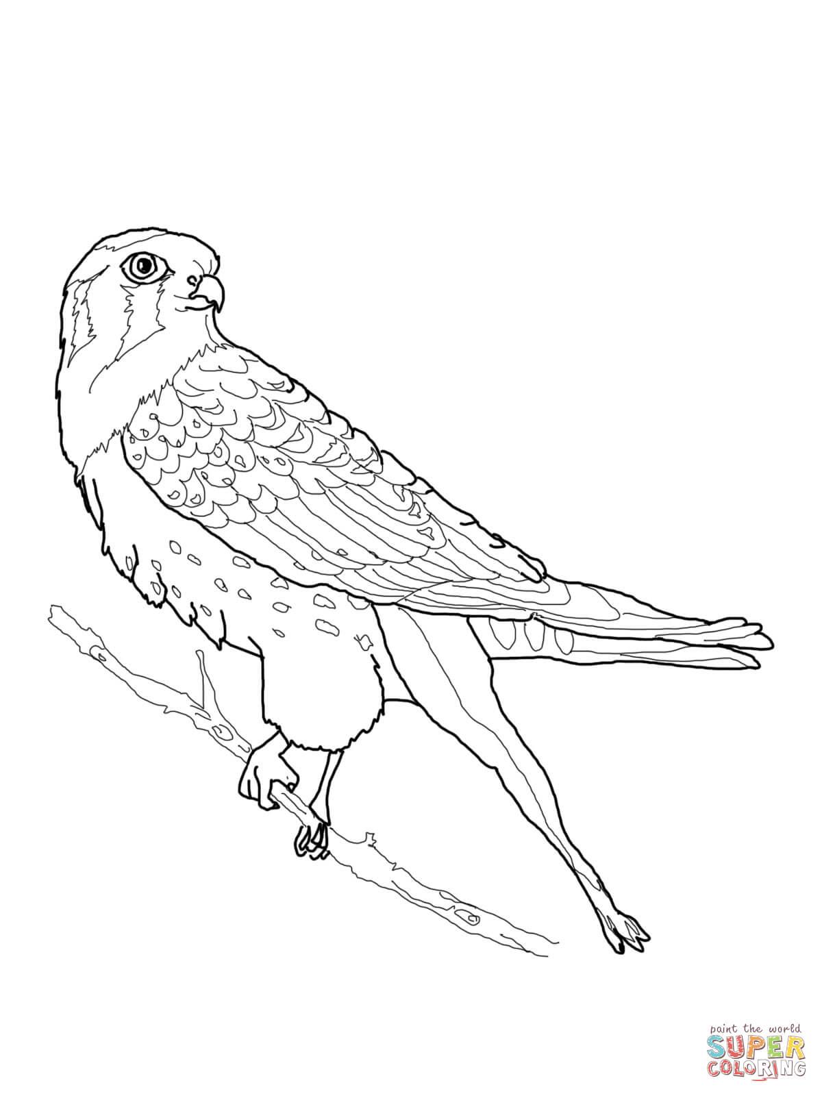 Dibujo de Cernícalo americano posando para colorear