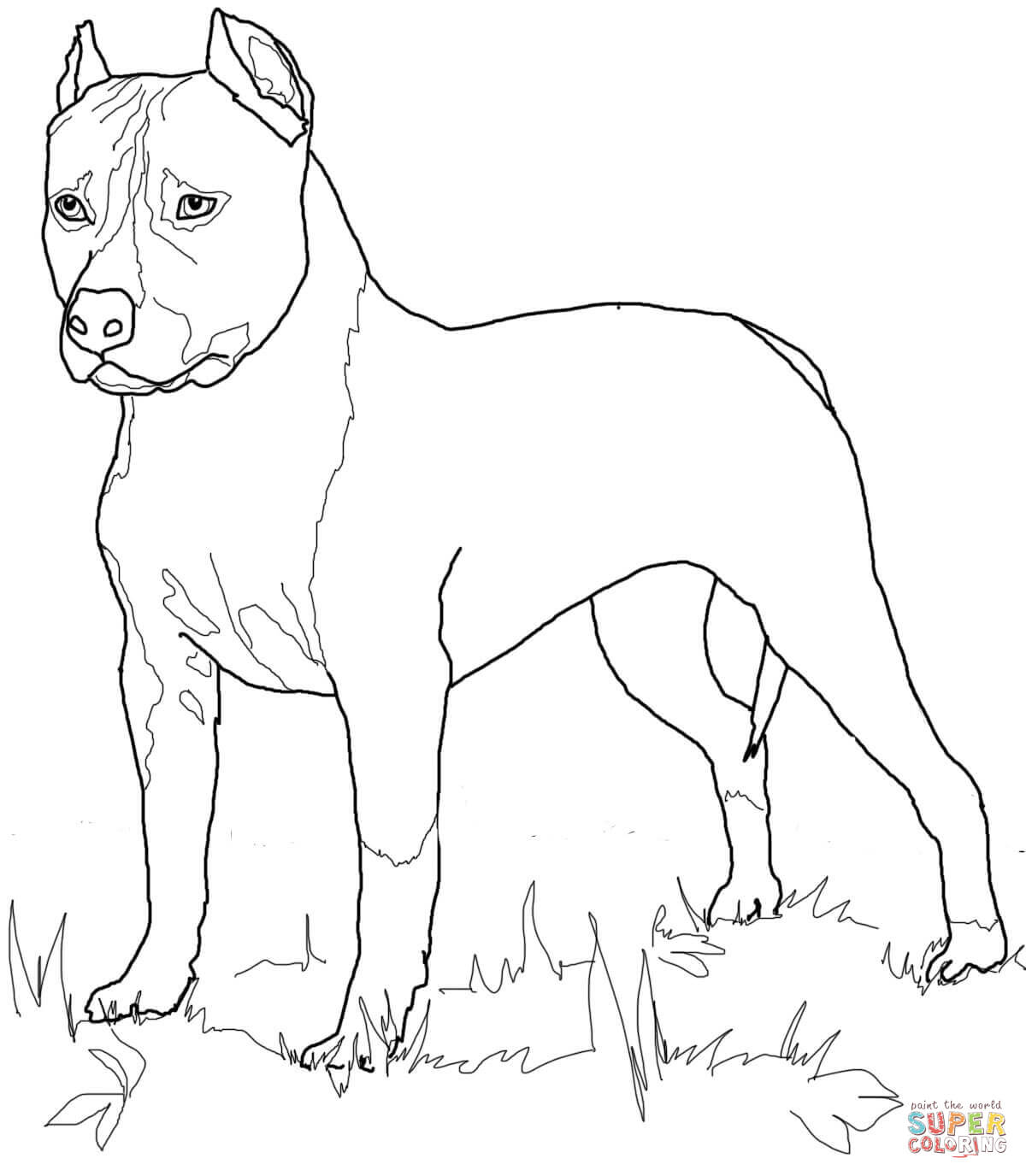 Dibujo De American Staffordshire Terrier O Amstaff Para
