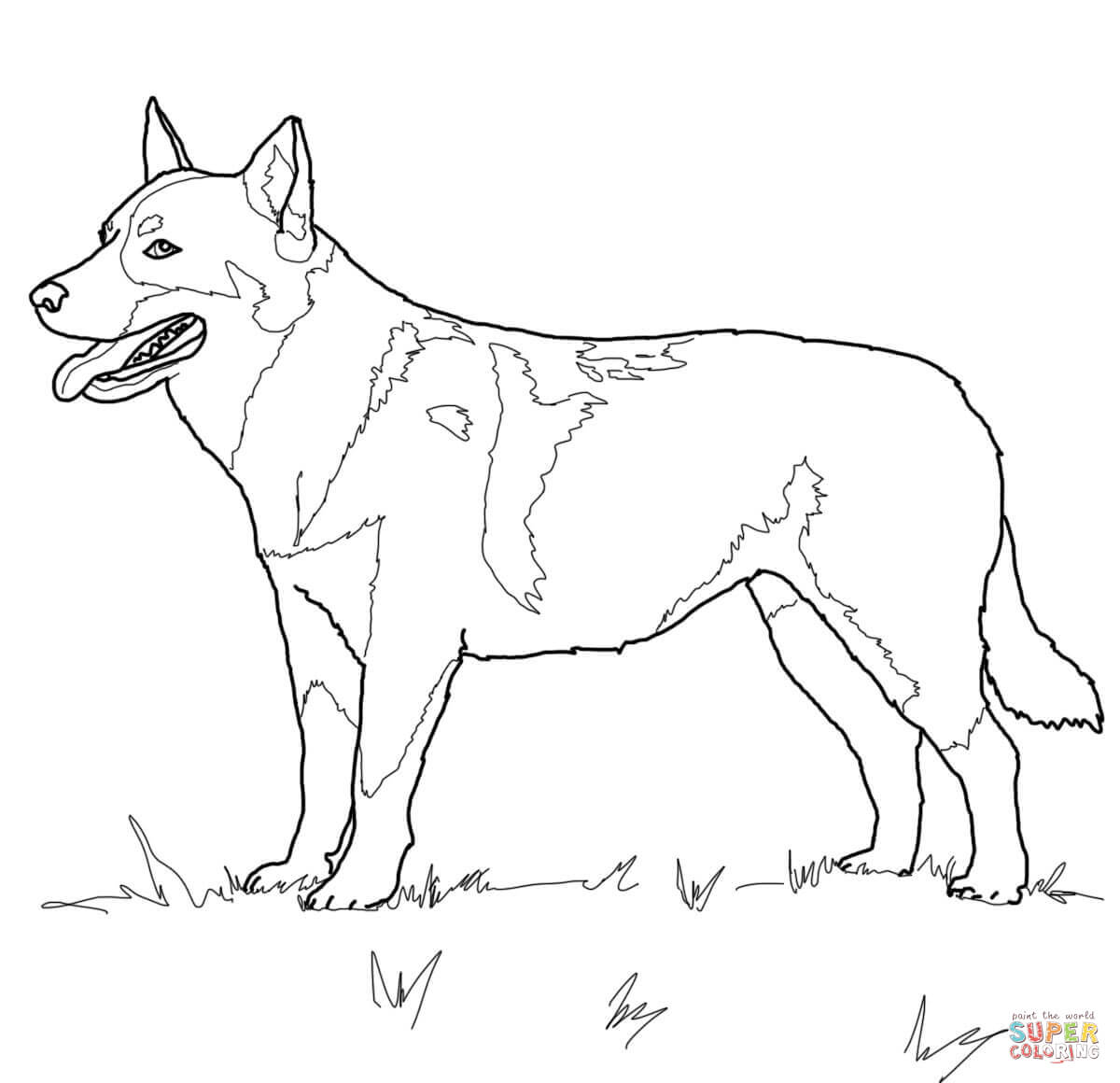 Disegno Di Australian Cattle Dog Da Colorare