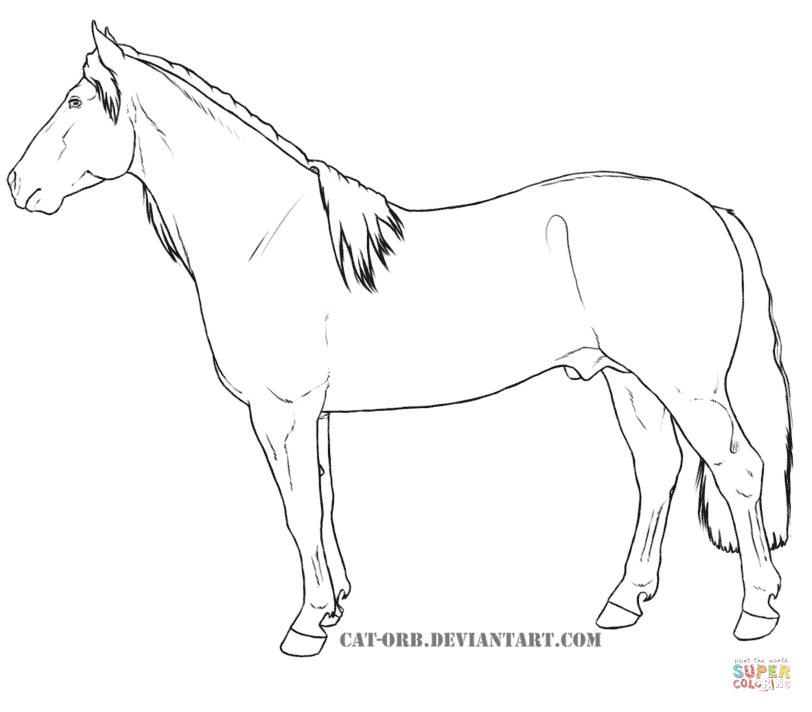 Shire Horse Coloring Pages Coloring Pages