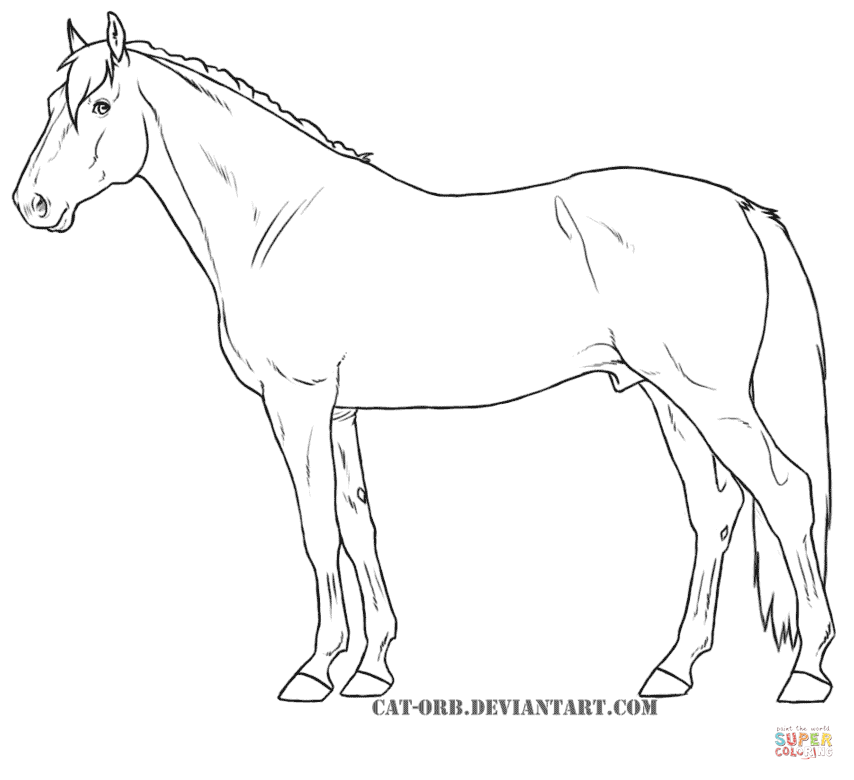 Australian Cattle Dog Coloring Pages
