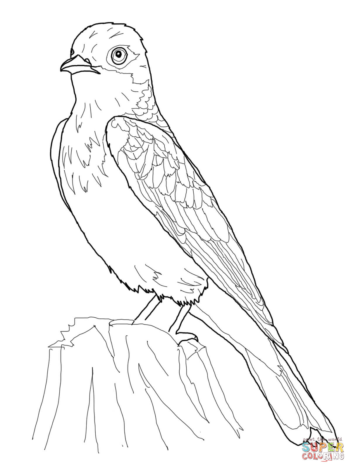 Eastern Kingbird Coloring Page
