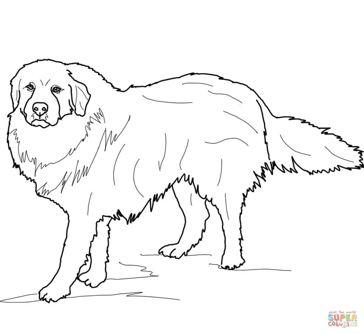 Great Pyrenees Coloring Page