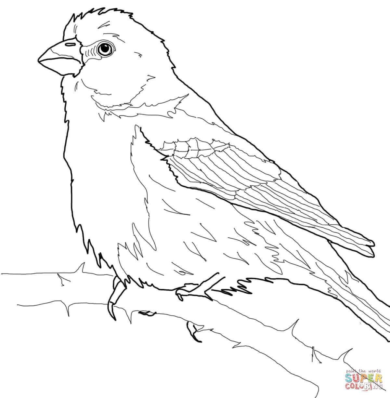 Bird Worksheet For Kindergarten