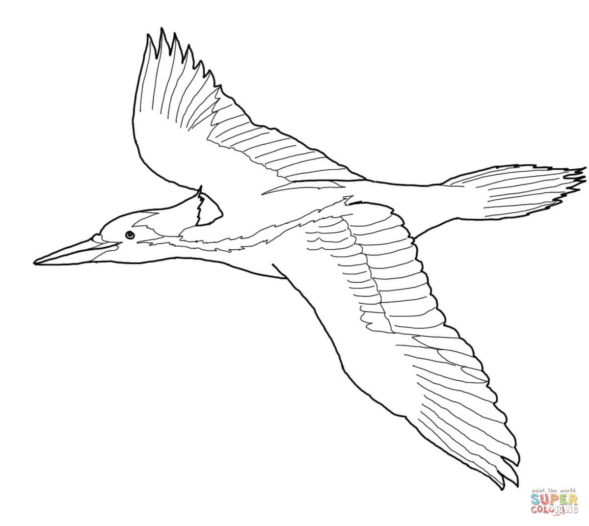 Ivory Billed Woodpecker Coloring Page
