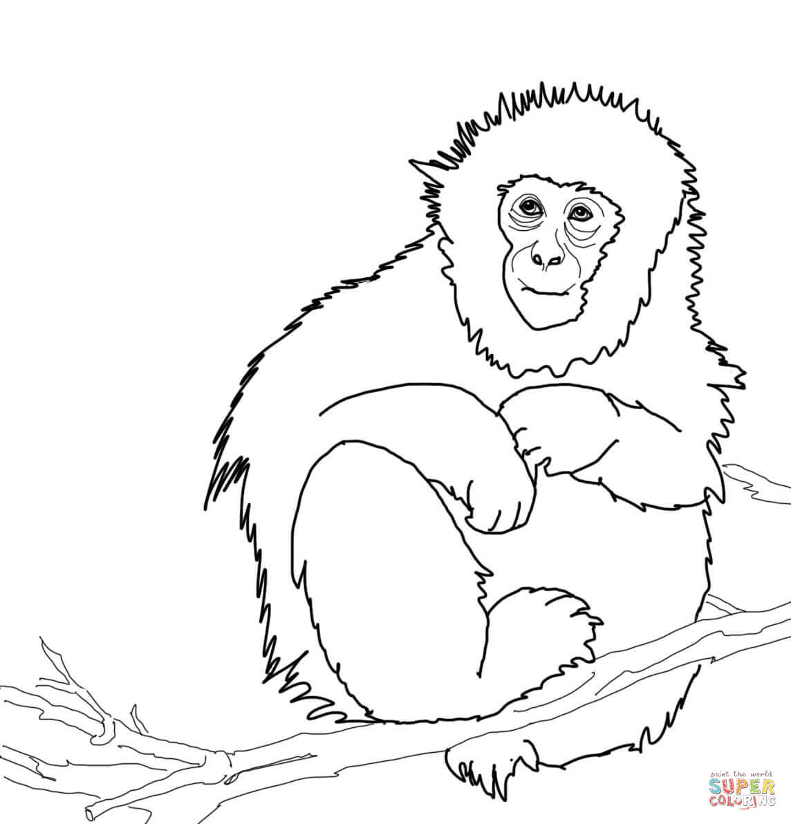 Japanese Macaque Or Snow Monkey Coloring Page