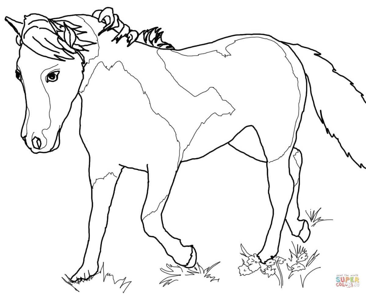 √ ausmalbilder steigende pferde  ausmalbilder pferde